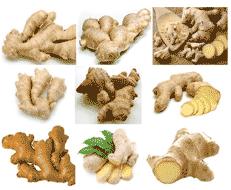 loveksa-ginger